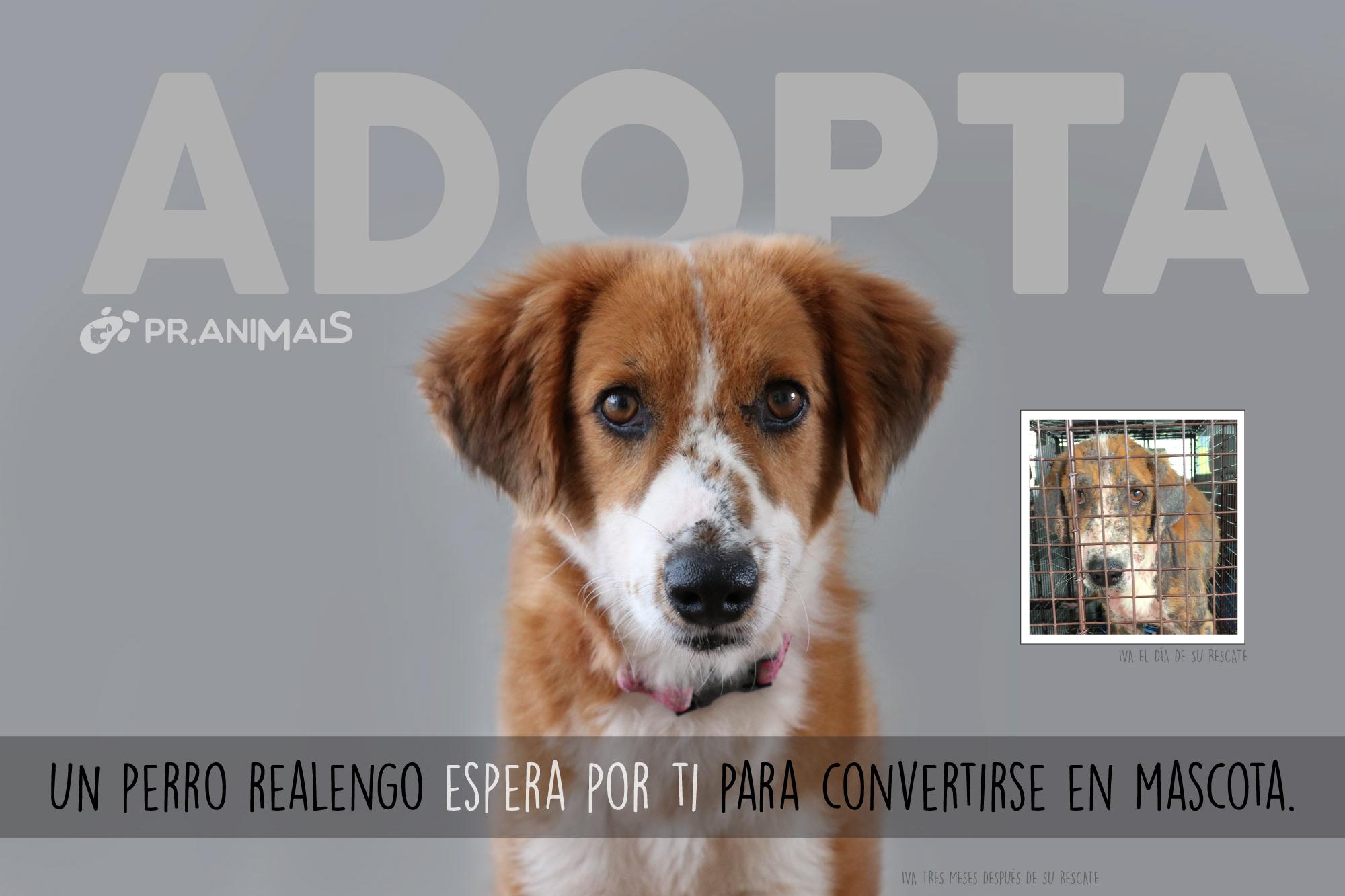 Adopta Hoy