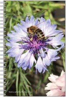 80 sheet lined notepad (blue cornflower)