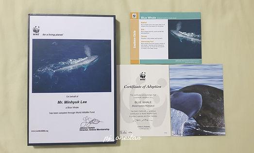 mh whale 9.jpg