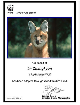wolfIM 3.jpg