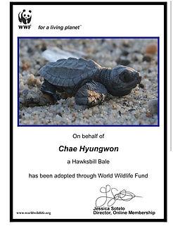 turtleHW 3.jpg