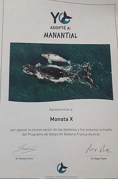 whale mx.jpg