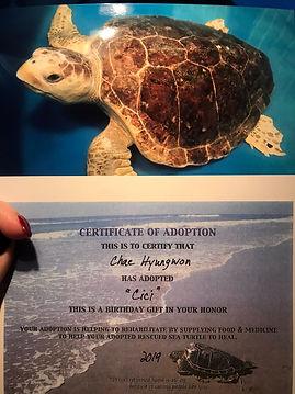 turtleHW 5.jpg