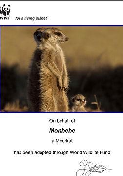 meerkatMX.jpg