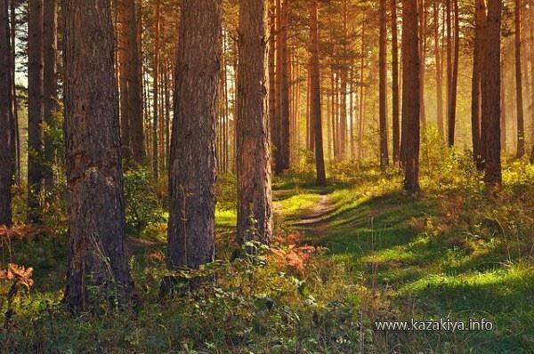 Живой воздух леса