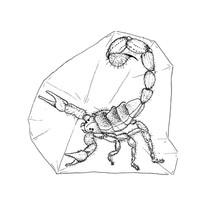 scorpion-07.jpg