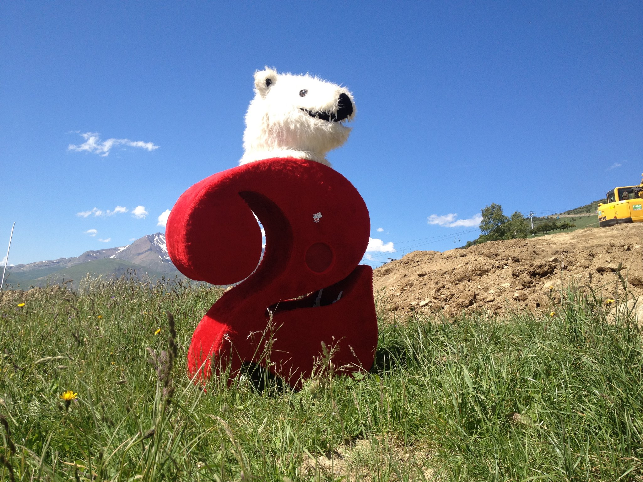 The bear gets everywhere....