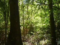 Bosque en Corto Maltes Amazonia