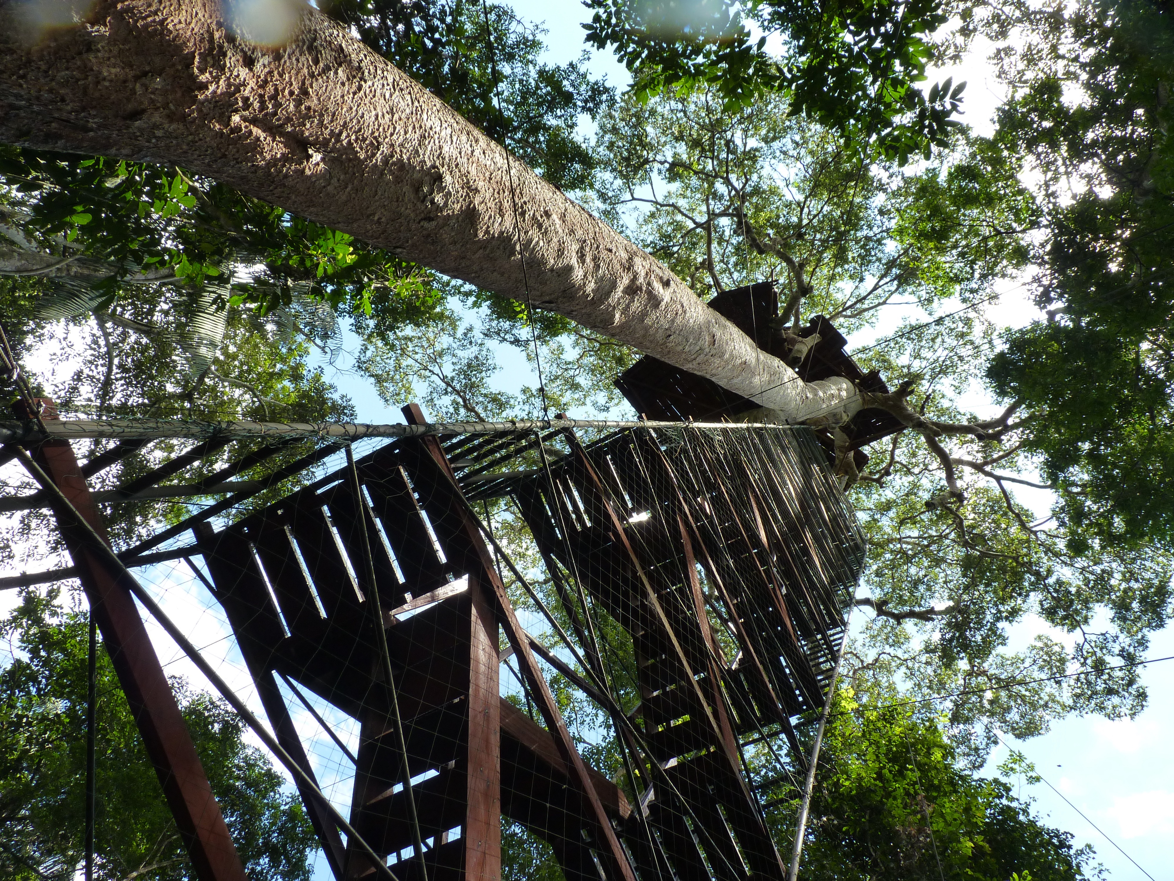 La torre de observación sobre los árboles