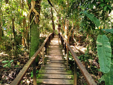 Corto Maltes Amazonia