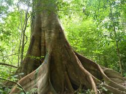 Belleza de árbol