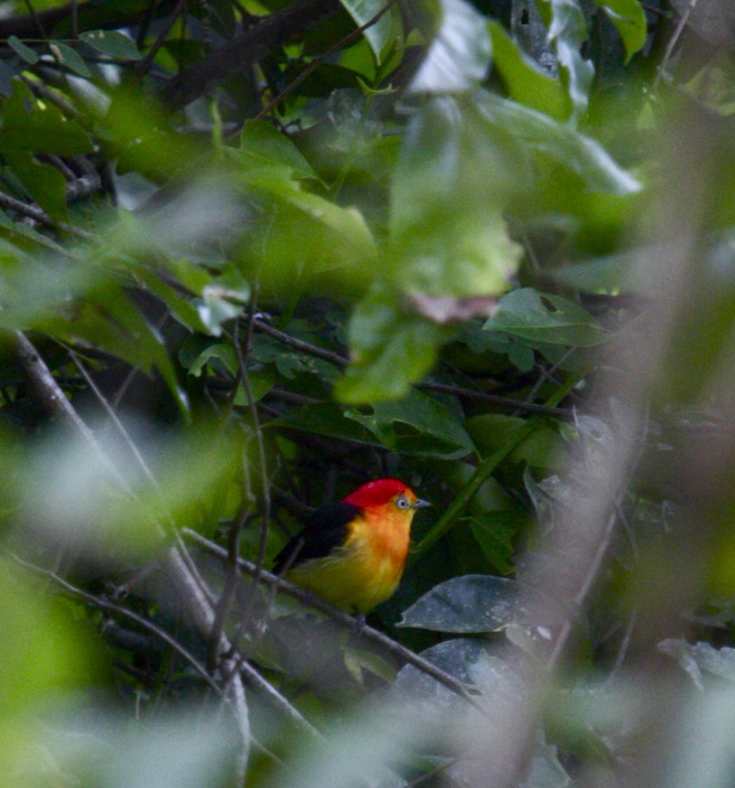 Rainforest de colores
