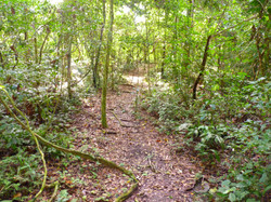 Nixi Pae Rainforest