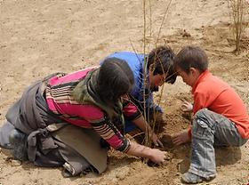 第一步:种植树苗.png