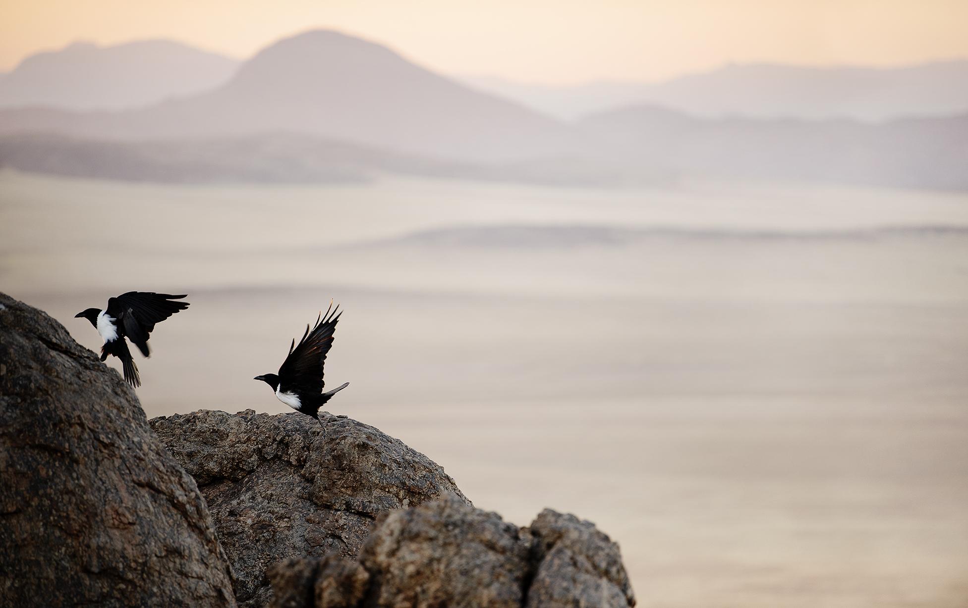 Black Crows, Namibia