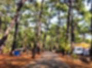 akyakadaki-orman-kampı.jpg