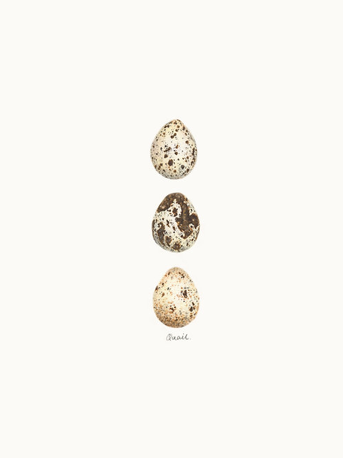Egg Print 03 – Quails