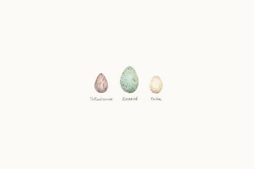 Egg Print 01 – Yellowhammer, Blackbird, Robin