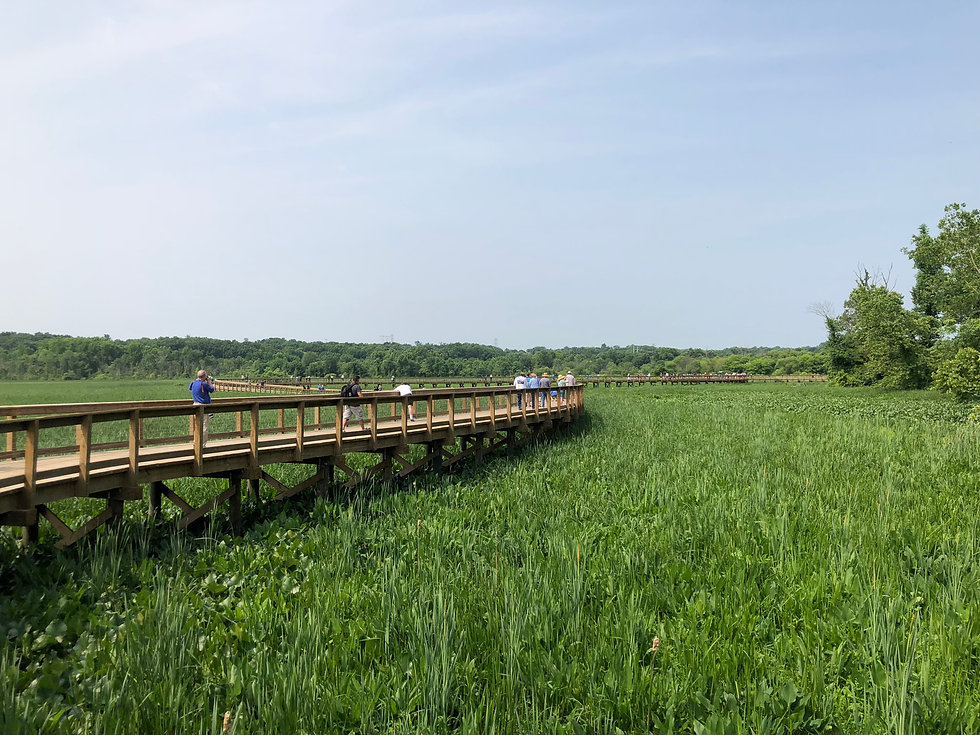 Neabsco Creek Boardwalk and lush, green marsh landscape.