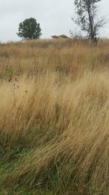 Pavilion nestled in the prairie grass