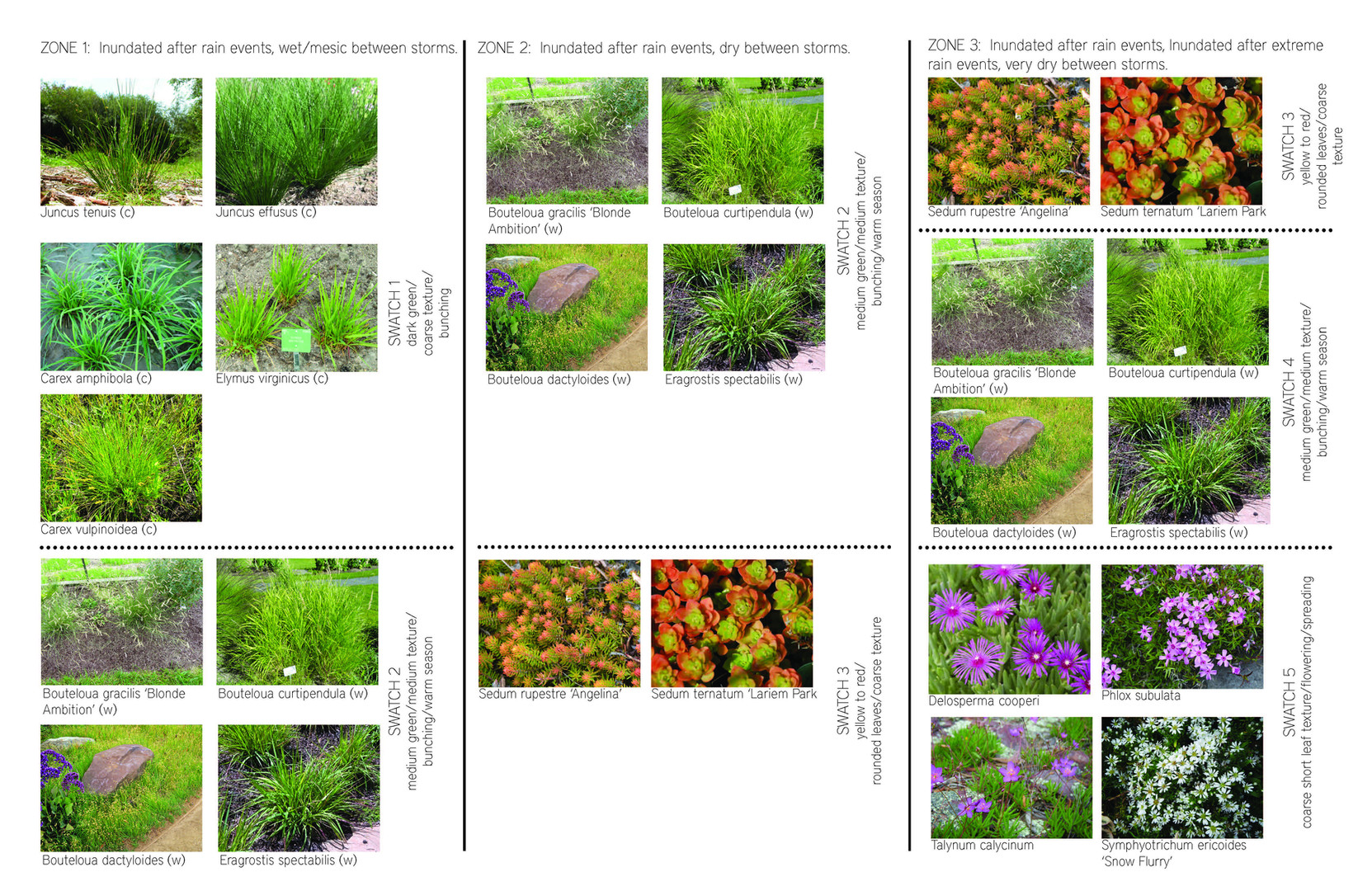 Plant Palette for Bioretention Basins