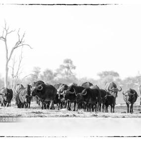 Wild Zimbabwe, Luxury Safari at Linkwasha camp in Hwange NP