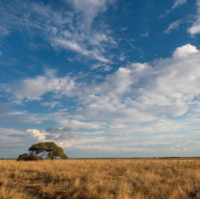 Botswana_Safari_Company__98A2167