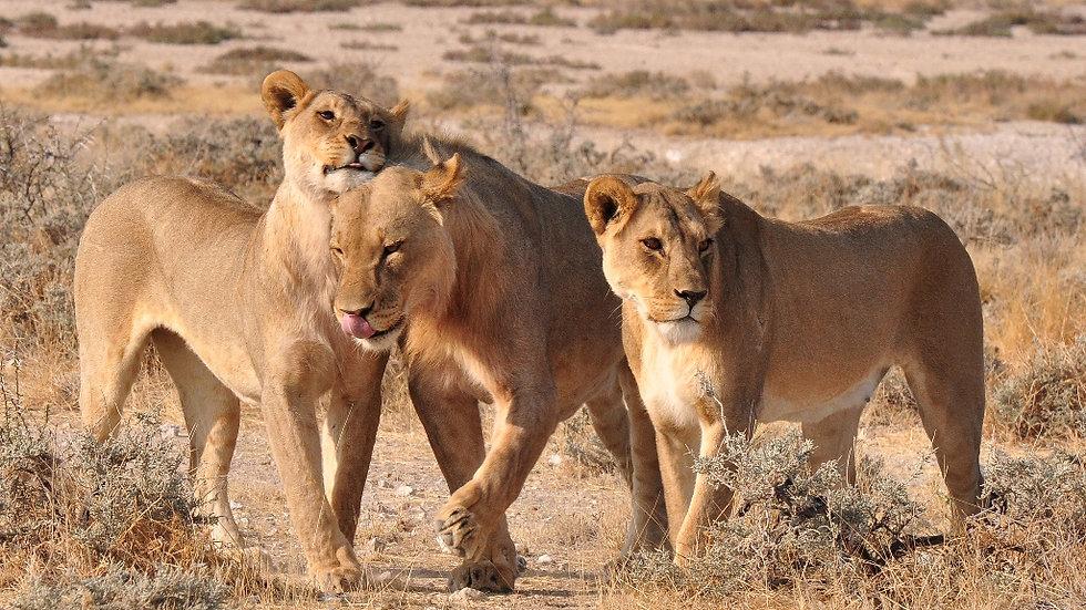 ULTIMATE NAMIBIA - 12nts