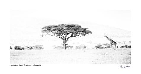Giraffe Tree.jpg