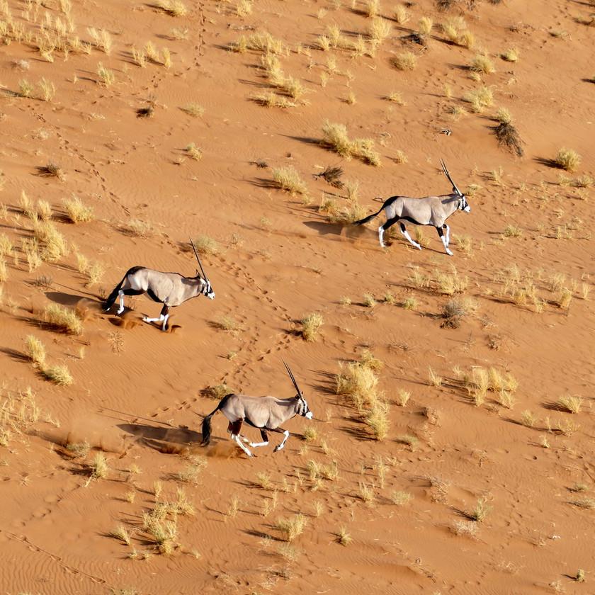 Oryx run Namibia safari itiner