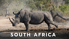 South_Africa_Safari.jpg