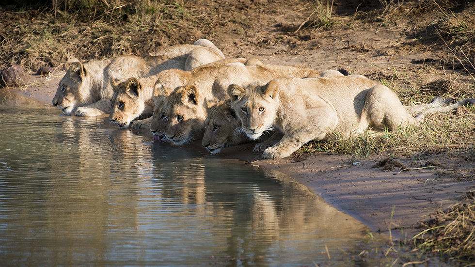 MY SOUTH AFRICA & KRUGER - 14nts
