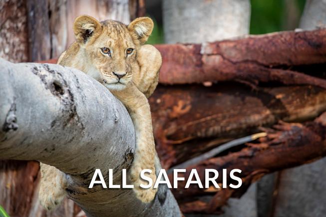 ALL SAFARIS