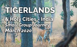 Tigerlands.jpg