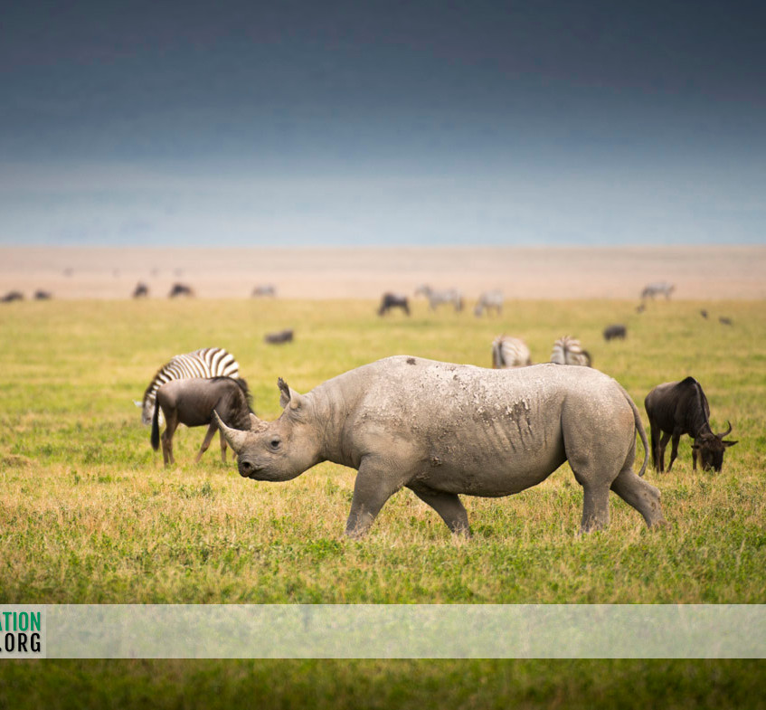 Ngorongoro Crater Jamie Thom 01