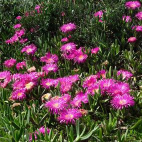 Cape West Coast - Flower explosion