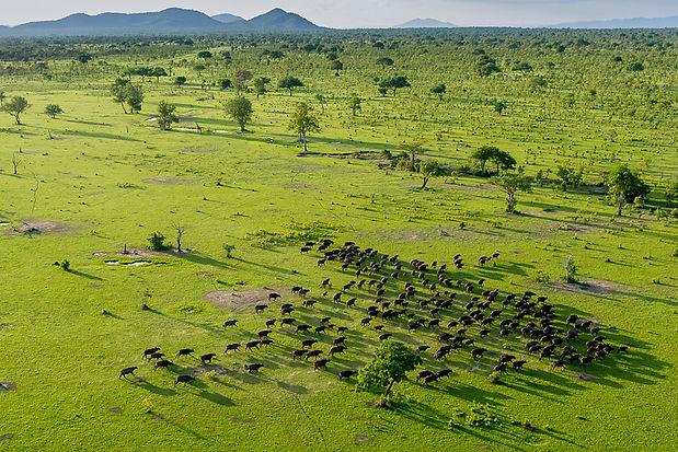 Selous aerial views.jpg
