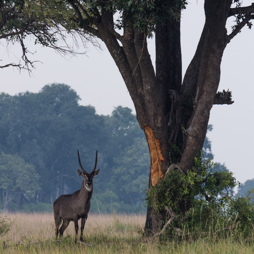 Botswana_Safari_Company__98A1404
