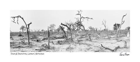 Dung and desolation.jpg