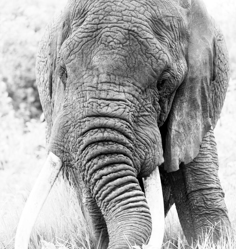 Ngorongoro Crater Jamie Thom 17