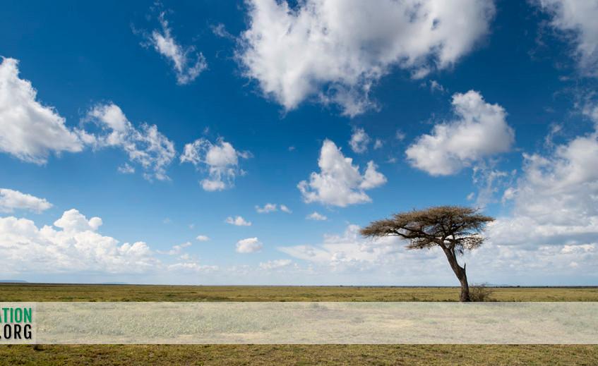 Ndutu landscapes 2
