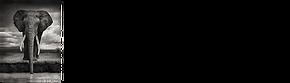 logo-BLF-horizontal-medium-small-elephan