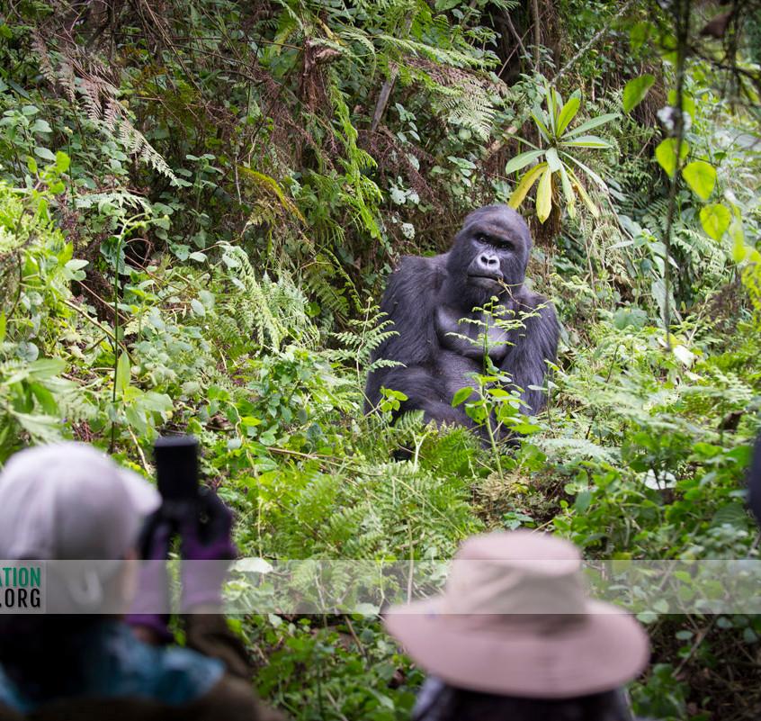 Rwanda Gorilla Safari 05