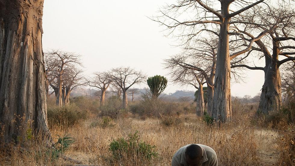 TANZANIA'S SOUTHERN PARKS