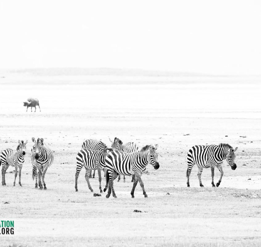 Ngorongoro Crater Jamie Thom 10