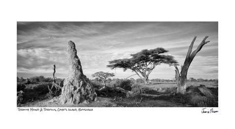 Termite Mound & Tortillis.jpg