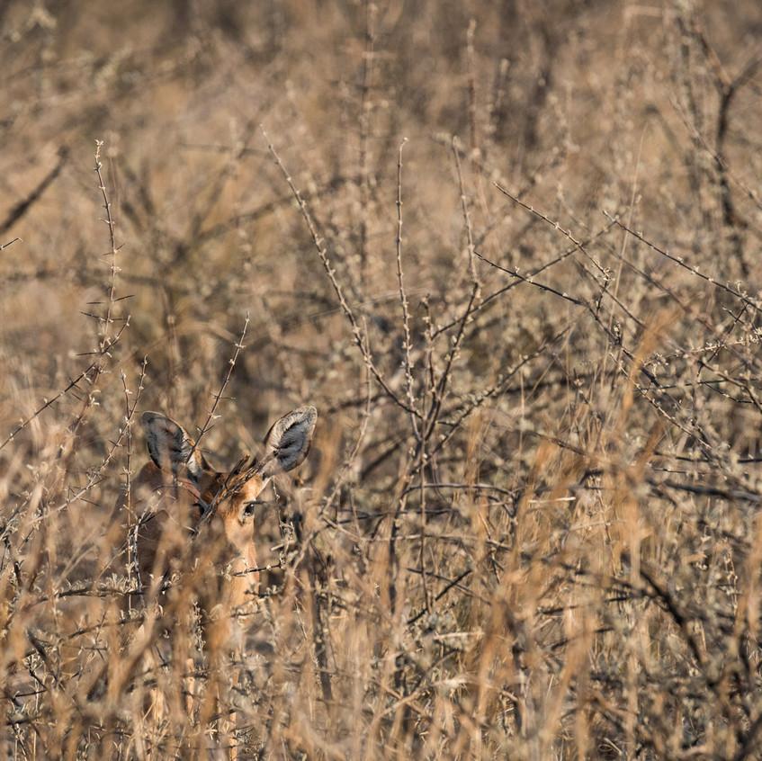 Botswana_Safari_Company__98A2427