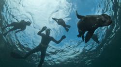 Seal_snorkelling.jpg