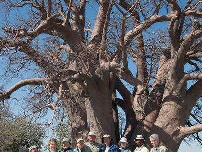 Chapman's Baobab falls