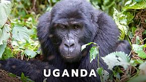 Uganda_Safari.jpg